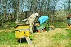 Arbete för tre beekeepers på en bikupa på bikupan solig dag Royaltyfri Fotografi