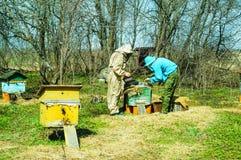 Arbete för tre beekeepers på en bikupa på bikupan solig dag Arkivbild