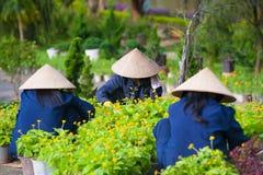 Arbete för tre vietnamesiskt kvinnor i trädgård Royaltyfria Foton