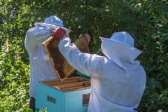 Arbete för två beekeepers i bikupan Royaltyfri Fotografi