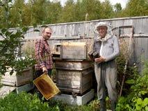 Arbete för två beekeepers om en bikupa Arkivbild
