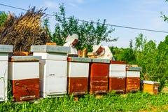 Arbete i bikupa Arkivfoton