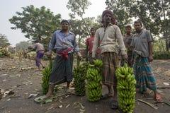 Arbeten laddar till uppsamlingsskåpbilen på gröna bananer Fotografering för Bildbyråer