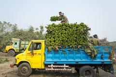 Arbeten laddar till uppsamlingsskåpbilen på gröna bananer Arkivbild