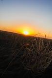arbetet av spindeln Fotografering för Bildbyråer