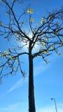Arbol. Con sol de fondo Stock Image
