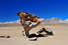arbol de piedra Royaltyfri Fotografi