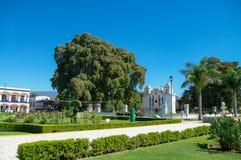 Arbol del Tule, ένα γιγαντιαίο ιερό δέντρο σε Tule, Oaxaca Στοκ Εικόνα