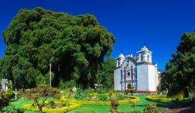 Arbol del Tule, albero di cipresso di Montezuma in Tule Oaxaca, Messico fotografia stock libera da diritti