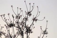 Arbol. Foto contraste blanco y negro Royalty Free Stock Images