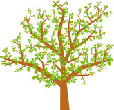 Arbol hojas v (vector) Royalty Free Stock Photo