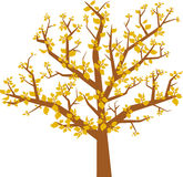 Arbol hojas (vector) Stock Photo