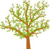 arbol v hojas wektora Zdjęcie Royalty Free