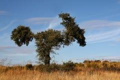 Arbol zwierzę Fotografia Stock