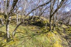 Arbolado de la montaña - la vegetación de las altas colinas Fotografía de archivo libre de regalías