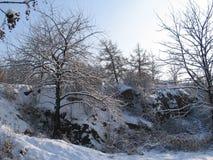 Arbolado del invierno Fotos de archivo