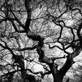 Arbolado del invierno Imagenes de archivo