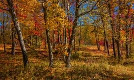 Arbolado del otoño fotografía de archivo