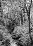 Arbolado del otoño con un funcionamiento rocoso de la corriente sin embargo el bosque Fotografía de archivo libre de regalías