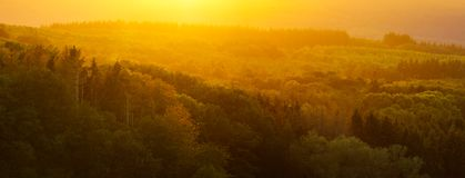 Arbolado en Autumn Sunlight fotos de archivo libres de regalías