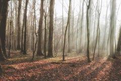Arbolado a finales del otoño Foto de archivo libre de regalías