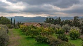 Arboleda anaranjada en Sicilia Foto de archivo libre de regalías