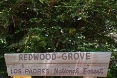 Arboleda Big Sur California de la secoya del bosque del Estado de los capellanes del Los Fotografía de archivo