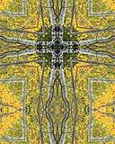 Arboleda cross2 de Aspen Foto de archivo libre de regalías