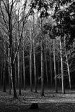 Arboleda de árboles Foto de archivo libre de regalías
