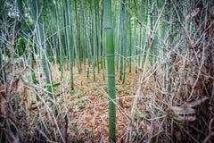 Arboleda de bambú imagen de archivo