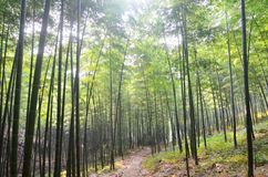 Arboleda de bambú imagenes de archivo