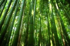 Arboleda de bambú Foto de archivo libre de regalías