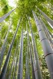 Arboleda de bambú Fotos de archivo