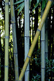 Arboleda de bambú Foto de archivo