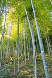 Arboleda de bambú con luz del sol dappled Imagenes de archivo