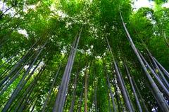 Arboleda de bambú en Kyoto, Japón Fotos de archivo libres de regalías