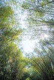 Arboleda de bamb? verde fresca imagen de archivo libre de regalías