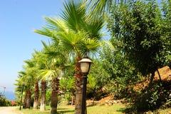 Arboleda de la palma Imagenes de archivo