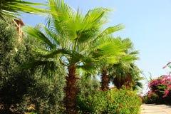 Arboleda de la palma Fotografía de archivo