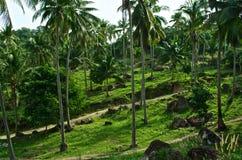 Arboleda de las palmeras del coco Imagen de archivo libre de regalías