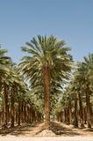 Arboleda de palmeras Imágenes de archivo libres de regalías