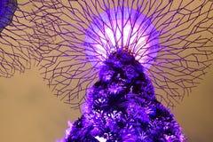 Arboleda de Supertree Imagen de archivo libre de regalías
