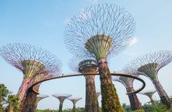 Arboleda de Supertree Fotografía de archivo libre de regalías