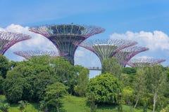 Arboleda de Supertree con el cielo azul fotos de archivo libres de regalías