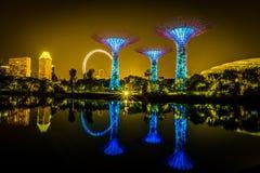 Arboleda de Supertree con la reflexión perfecta Imagenes de archivo