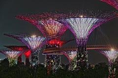 Arboleda de Supertree de la noche en Singapur HDR fotos de archivo libres de regalías