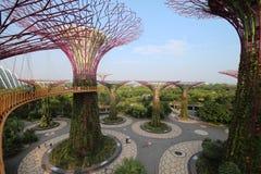 Arboleda de Supertree en Singapur Foto de archivo