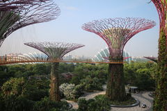 Arboleda de Supertree en Singapur fotos de archivo libres de regalías