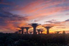 Arboleda de Supertree Jardín por la bahía en el área de Marina Bay en la salida del sol en la ciudad de Singapur imágenes de archivo libres de regalías