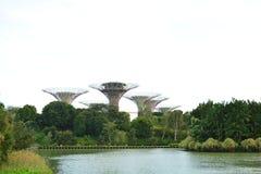 Arboleda de Supertrees en los jardines por la bahía, en Singapur Imagen de archivo